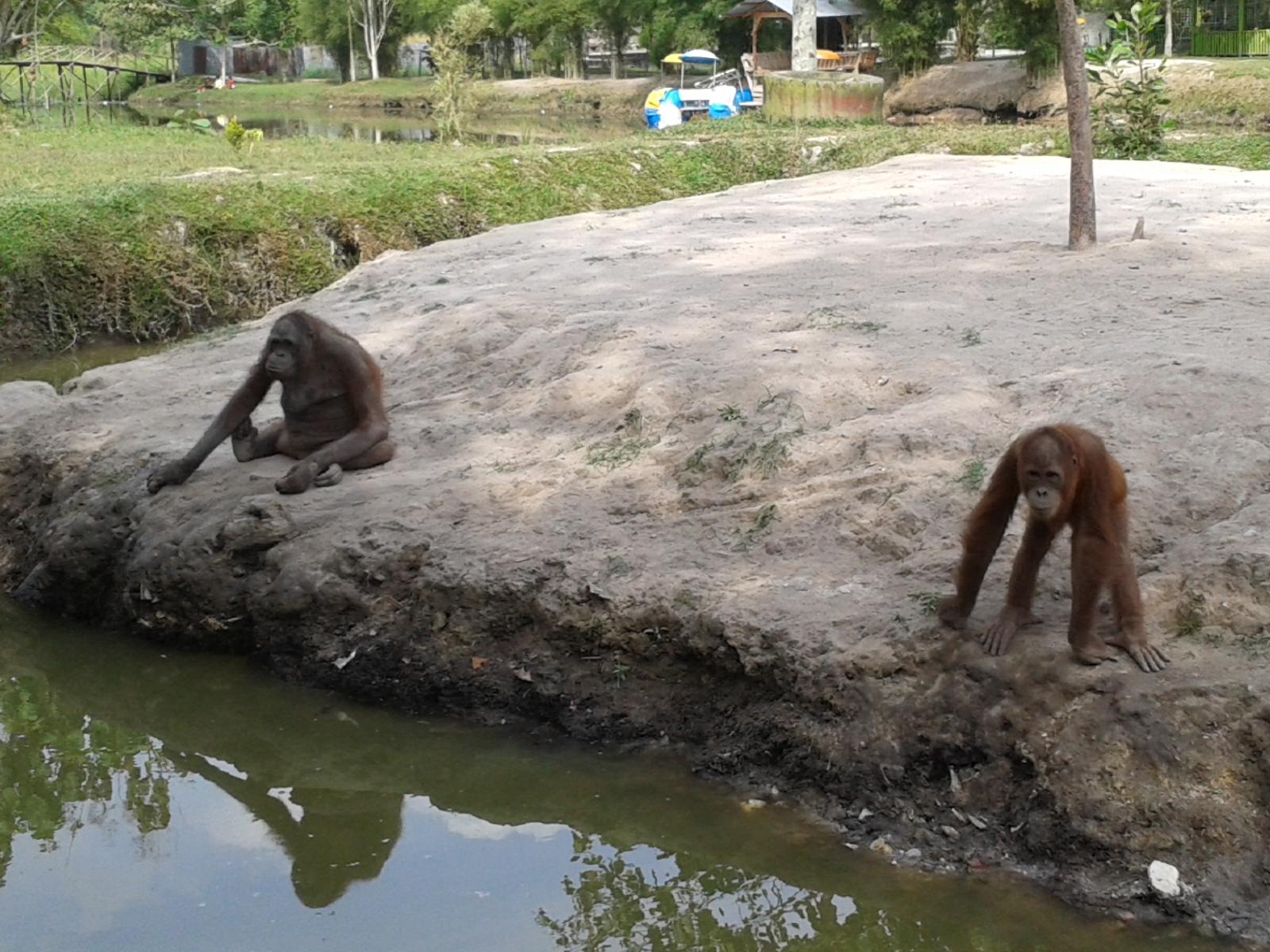 Refreshing Ke Kebun Binatang Erit Kantonis Blog